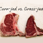 corn-fed-vs-grass-fed-holisticwellnessnetwork-230