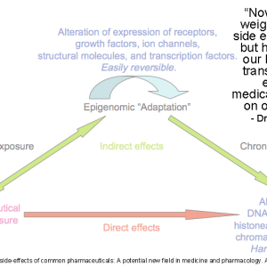 Transgenerational effects of Medication: A New Field
