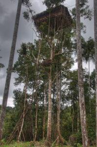 Korowai Treehouses
